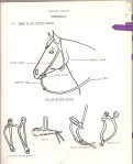 Western bridle and bits